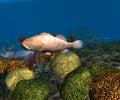 OceanDive Screenshot 1